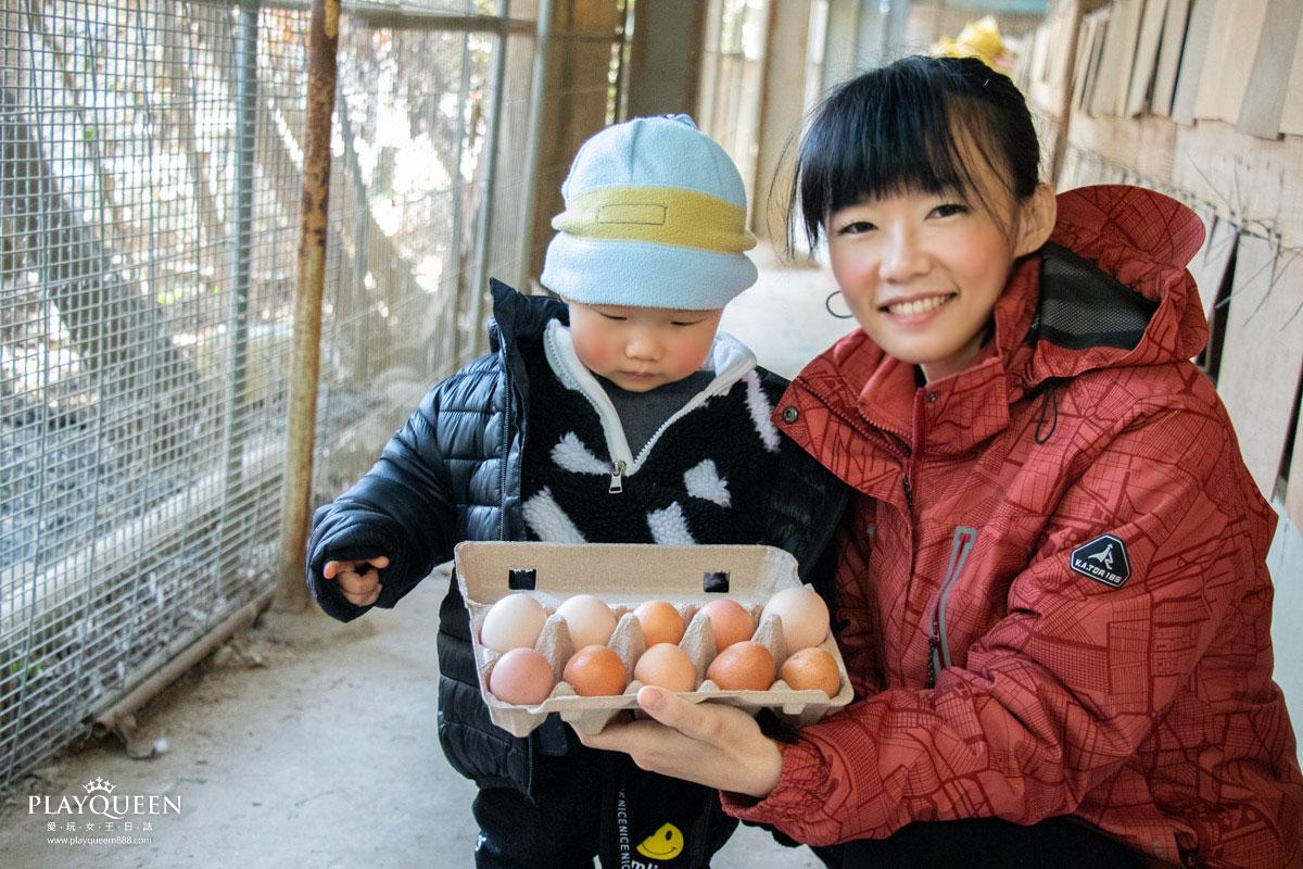 桂園自然生態農場|夢幻彩色雞蛋,益生菌飼養,無毒無抗生素,最純淨的雞蛋,彰化親子旅遊必訪